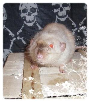 Généalogie des ratons 011109_020403_LORD_72wRMQ