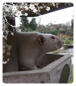 Généalogie des ratons 210909_182507_LORD_AcNcbU